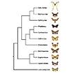 A global checklist of the Bombycoidea ...