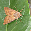 Species conservation profile of moths ...