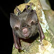 New records of bats and terrestrial small ...