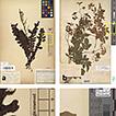 Designing an Herbarium Digitisation Workflow ...