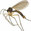 Coelosynapha, a new genus of the subfamily ...