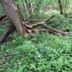 Communities of ground beetles (Carabidae, ...