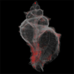 Micro-CT protocols for scanning and 3D ...