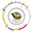 The complete mitogenome of Curculio chinensis ...