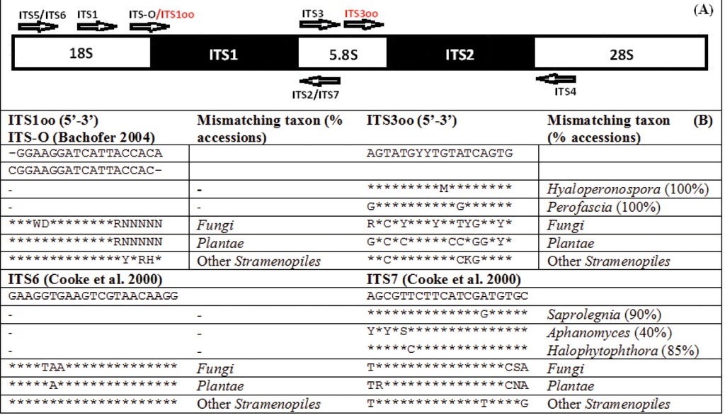 Oomycete-specific ITS primers for identification and metabarcoding