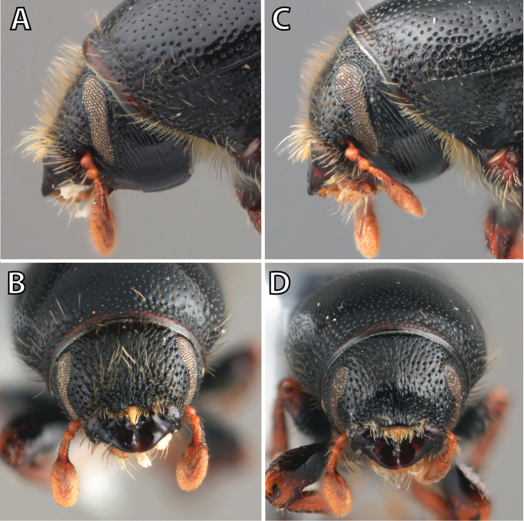 A Taxonomic Monograph Of Nearctic Scolytus Geoffroy Coleoptera Computer Circuit Board With Binary Code Closeup Digital Compostie Figure 1
