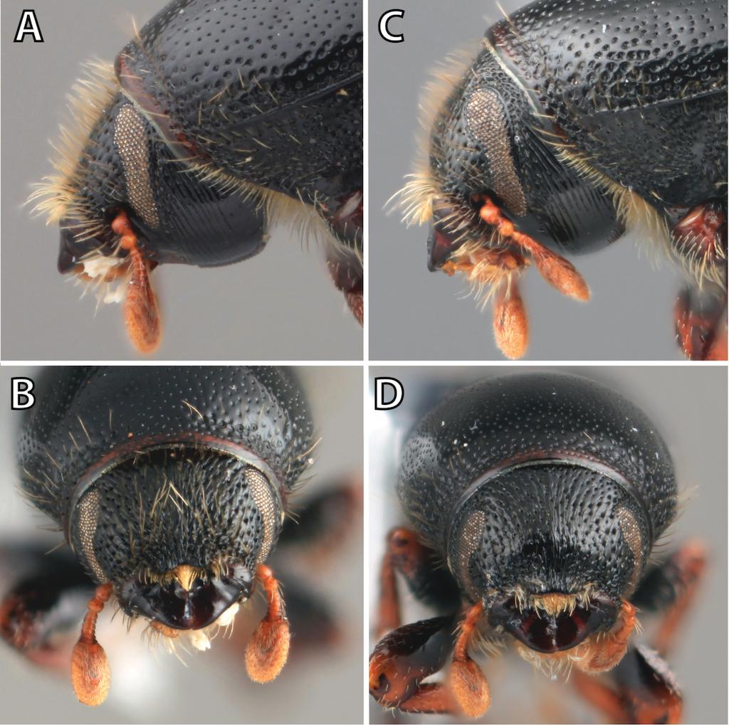 A Taxonomic Monograph Of Nearctic Scolytus Geoffroy Coleoptera Computer Circuit Board With Binary Code Closeup Digital Compostie Figure 1