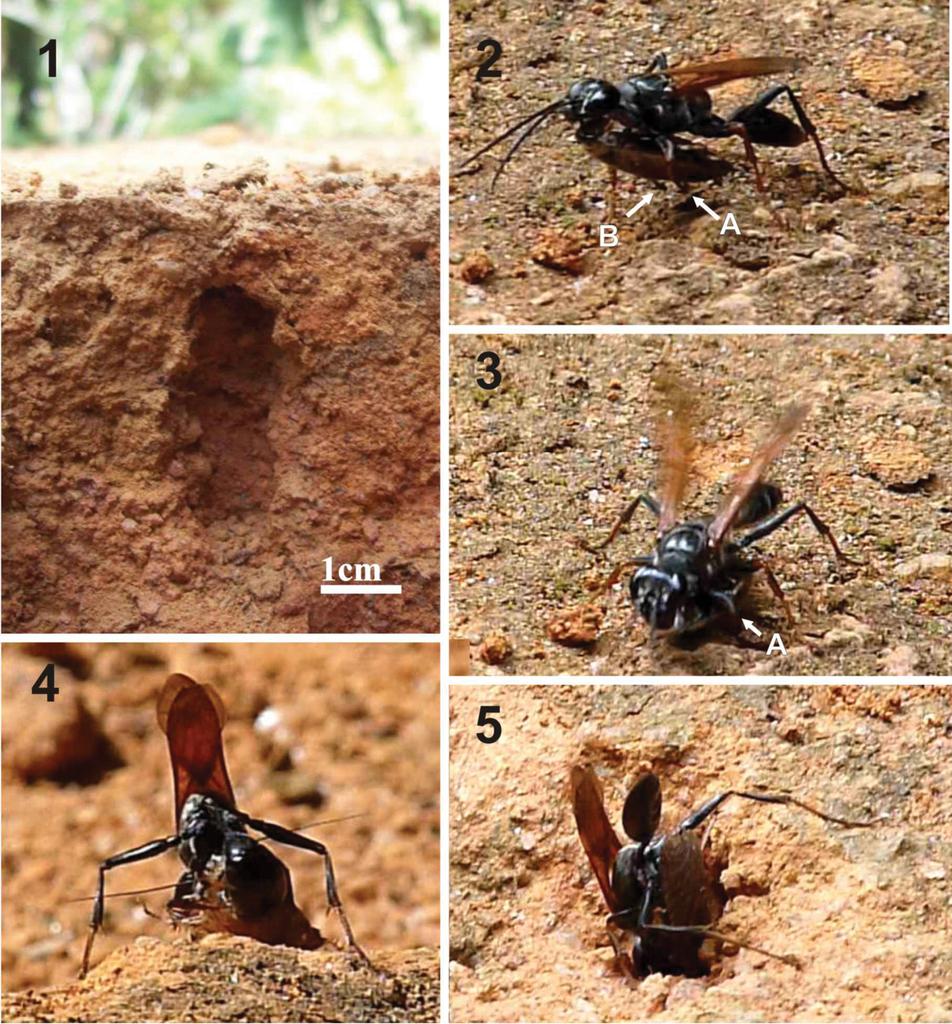 Bộ sưu tập côn trùng 2 - Page 4 Showimg.php?filename=big_56016