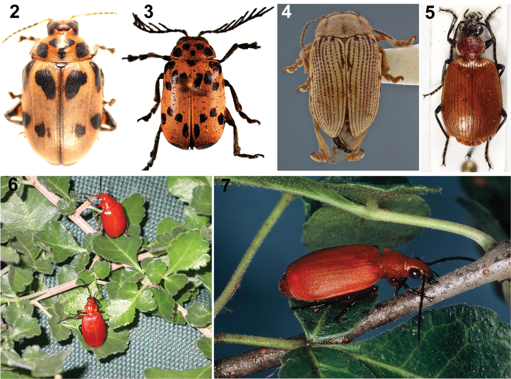 Beetle and plant arrow poisons of the Ju|'hoan and Hai||om