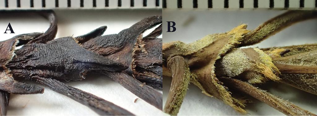 rubus species tasmania seed