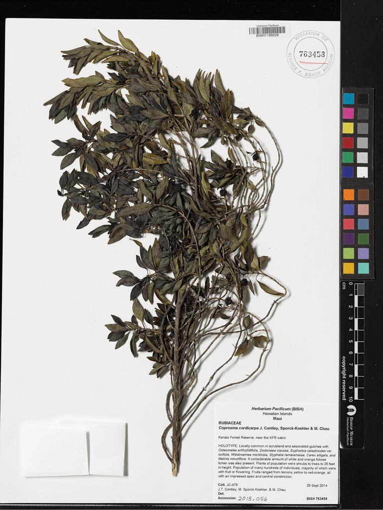 oliver apex 700