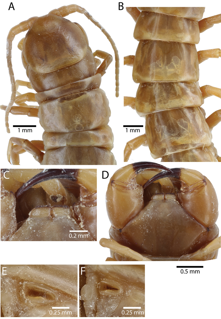 A taxonomic review of the centipede genus Scolopendra