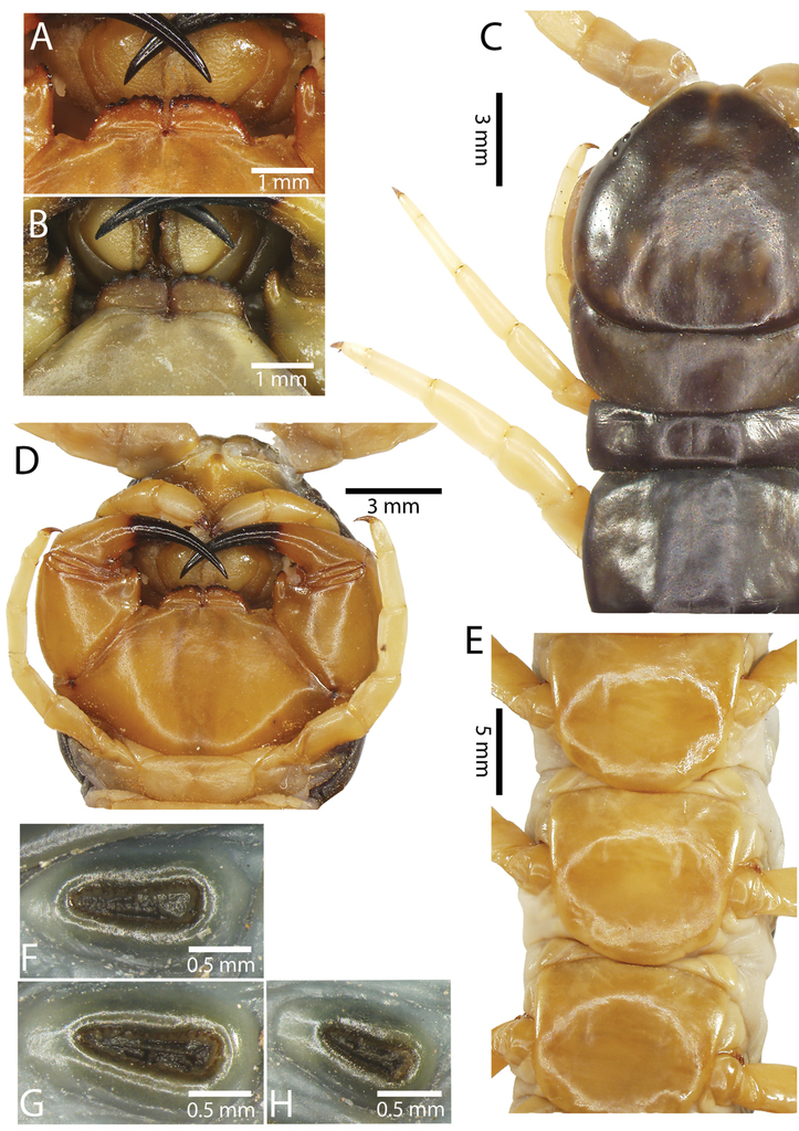 A taxonomic review of the centipede genus Scolopendra Linnaeus, 1758