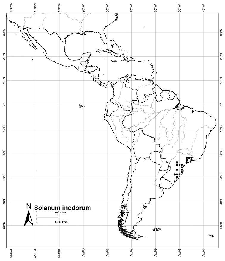 A revision of the dulcamaroid clade of solanum l solanaceae fandeluxe Images