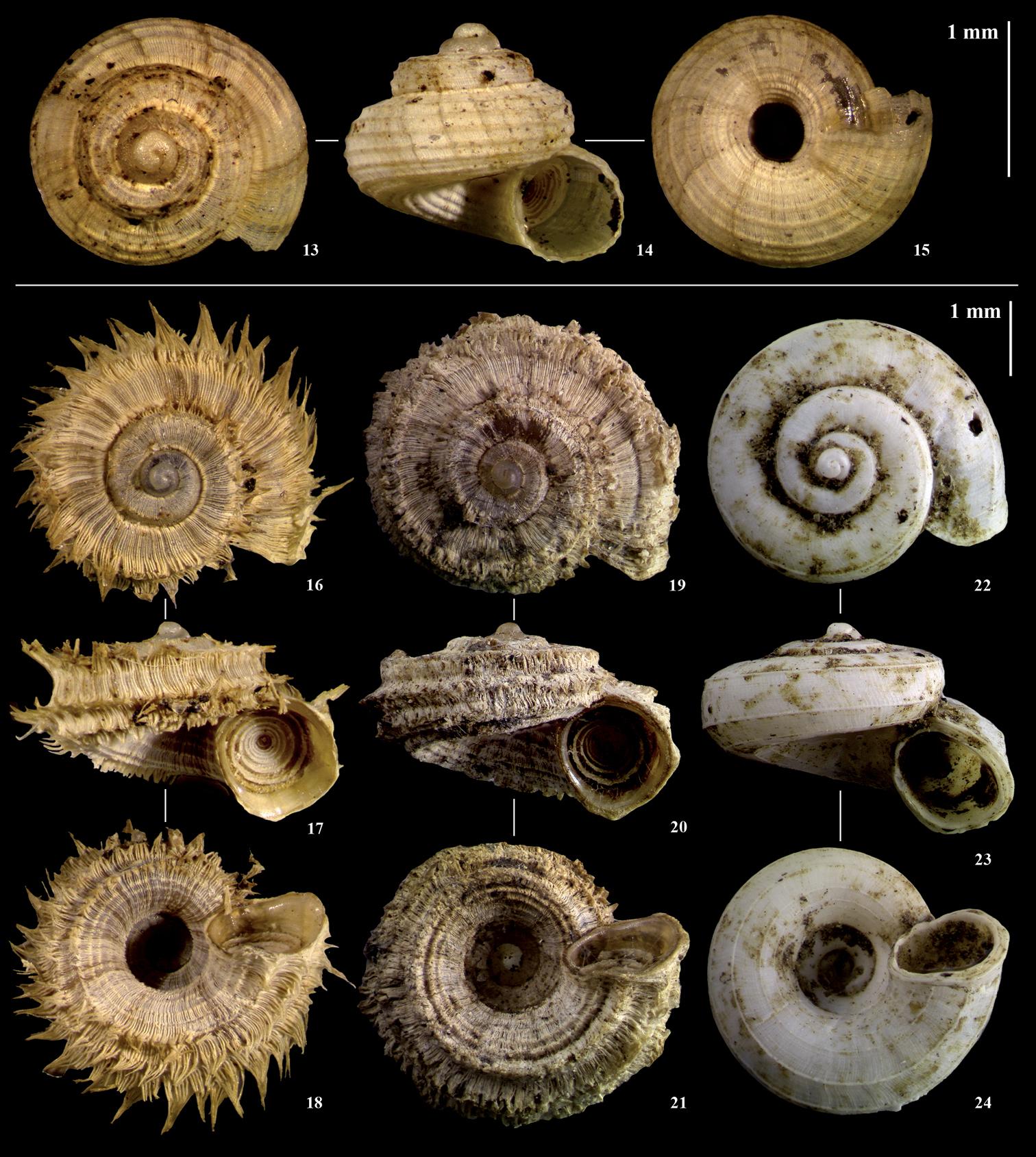 Terrestrial molluscs of Pemba Island, Zanzibar, Tanzania, and its ...