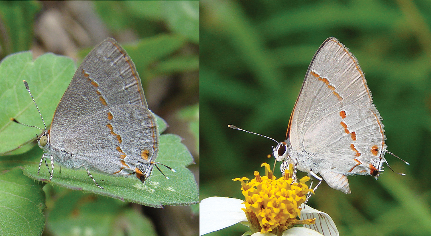 butterflies research papers Research paper open access a review on morphological characterization, variation and distribution pattern of eurema butterflies of peninsular  butterflies that .