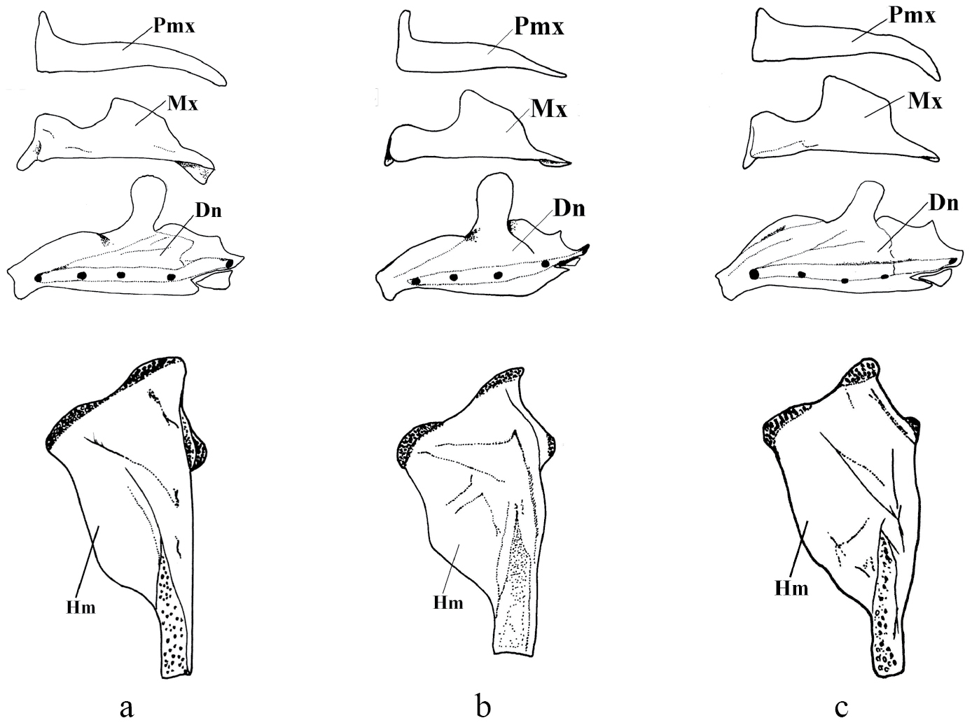 Hyomandibulare