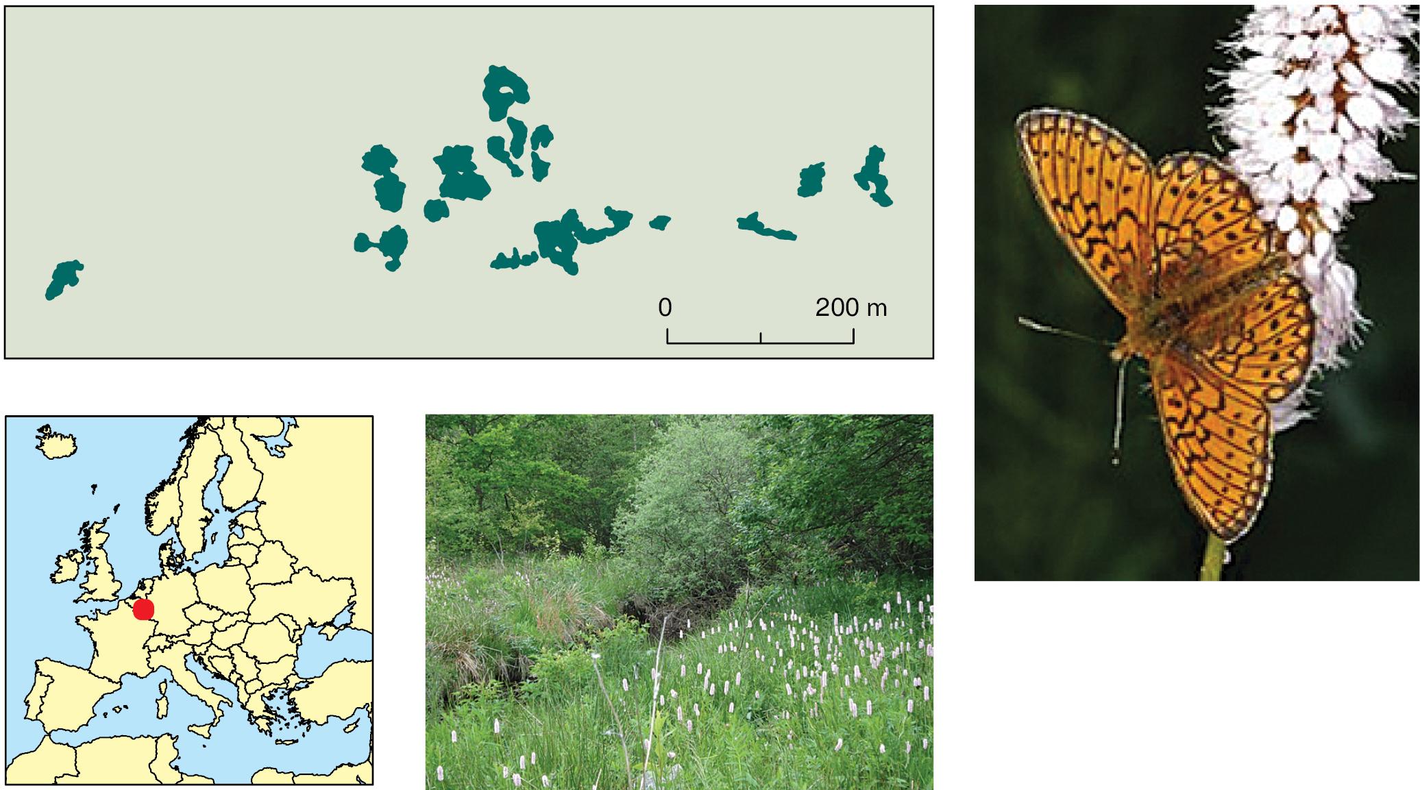 test sk carbon von butterfly